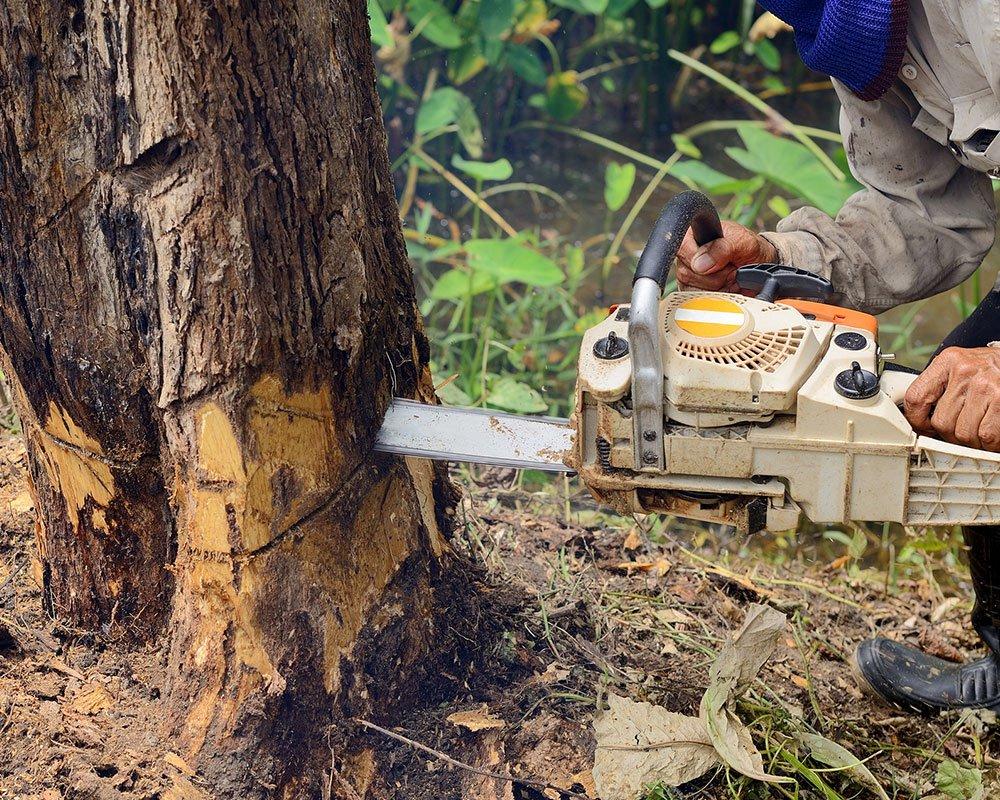 Tree Service Dallas - Tree Removal