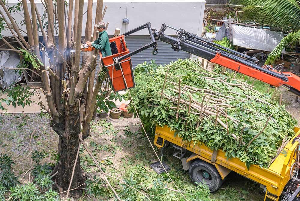 Tree Service Dallas - Tree Pruning