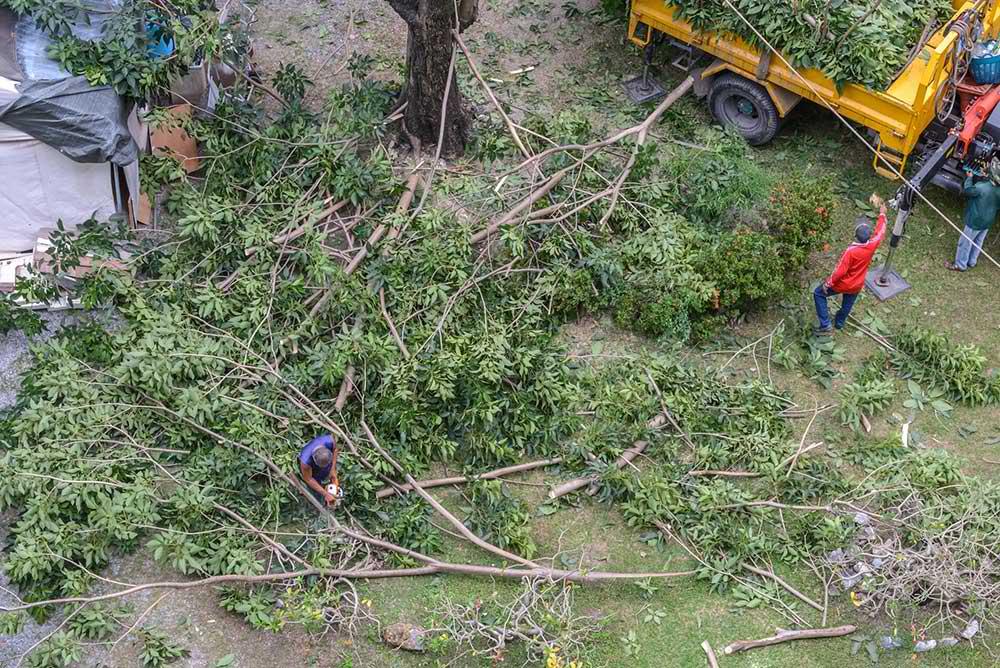 Tree Service Dallas - Tree Trimming